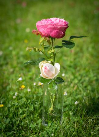 i like: I like the flowers - looks nice and lovely