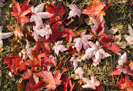 leafs: leafs on ground in beautiful colors Stock Photo