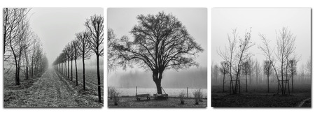 sampler as a triptych of three pictures with trees in morning fog Stock Photo