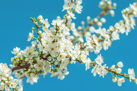 picture of lovely little white blossoms Stock Photo
