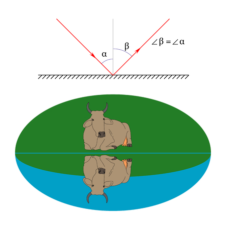 Illustration of the law of reflection of light and an example of a cow specular reflection from the water surface Illustration