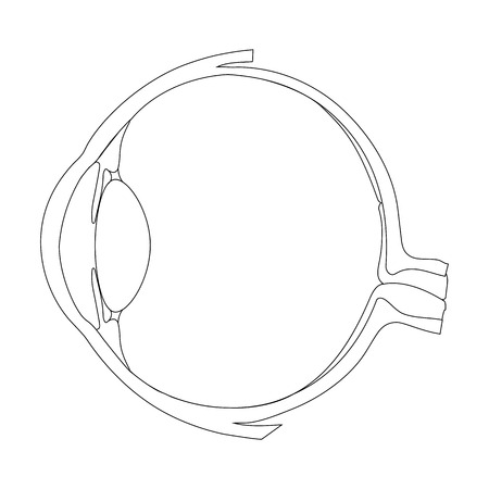 Illustration of the eye as an optical system. The student must write the names of parts of the eye.