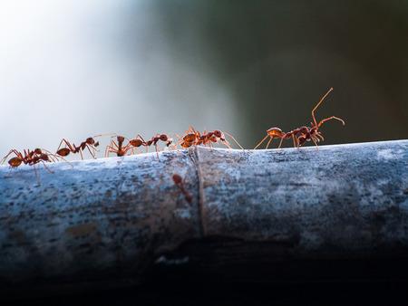 Ant Imagens - 38490119