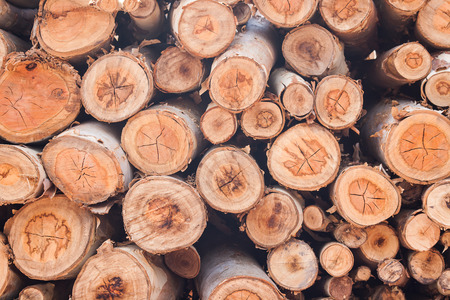 Deforestation, stack of timber Imagens - 39233175