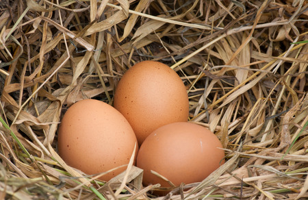 hay: still life eggs. Eggs, three eggs in the nest of dry grass.