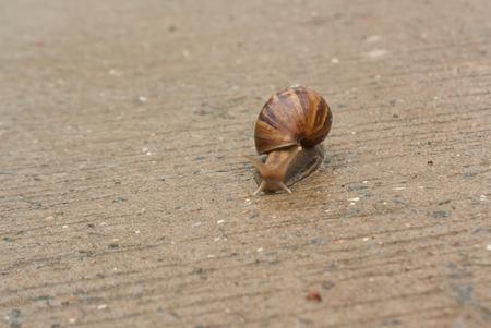 onto: Snail climb onto the concrete floor.