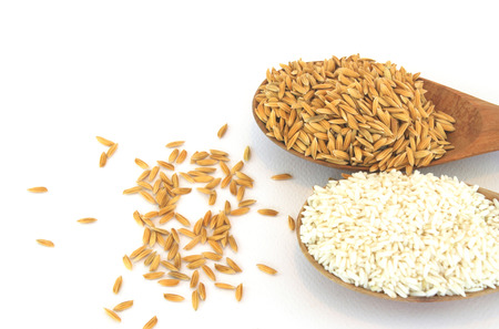 livelihoods: Seed paddy and rice in a wooden spoon white background. Stock Photo