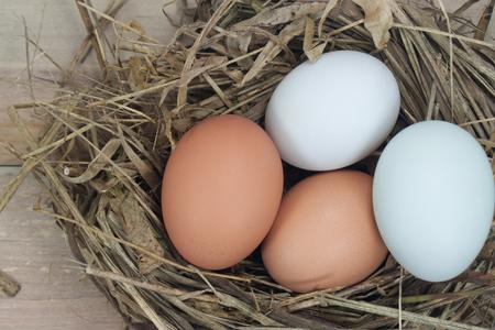 huevo blanco: todav�a huevos vida. Huevos, tres huevos en el nido de hierba seca. Pisos de madera viejos.