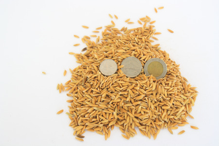 monedas antiguas: Monedas antiguas ponen en el arroz amarillo.