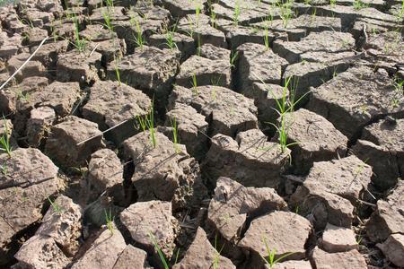 sequias: Aislamiento de la tierra, la sequ�a, la escasez de agua.