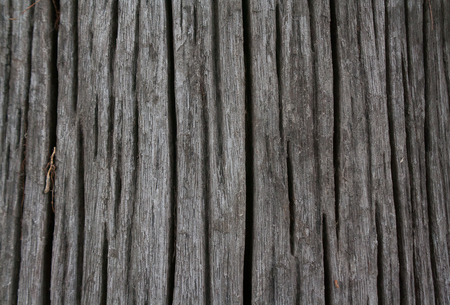 Abstract wood conditionold. Heartwood textures old.