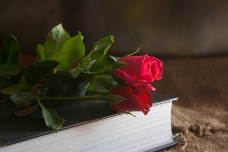 bible flower: Still Life- rose on the book cover Stock Photo