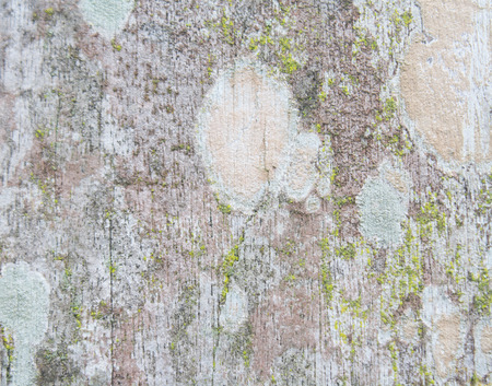 duramen: conditionold de madera abstracto. texturas de duramen de edad.