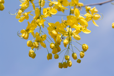 Yellow flowers, clear sky background