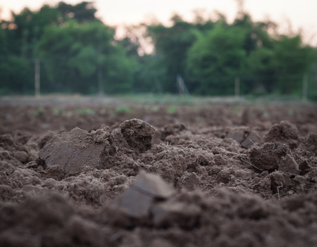 Soil clods from nature, farmland The soil is suitable for cultivation of agricultural crops.