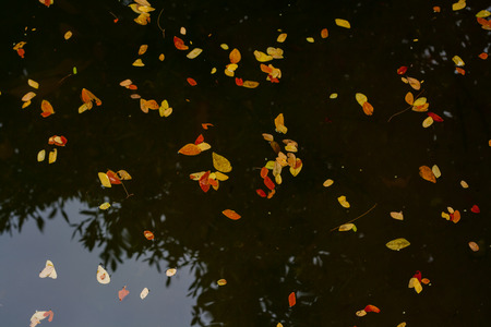 abstract background leaves floating on the surface yellow-orange color, Reflection on the surface. Imagens - 103525501