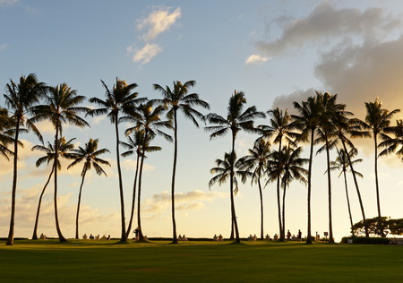 In the sun loungers under tall palm trees and the evening light - Location: Hawaii