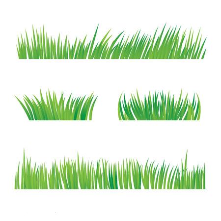 緑の草の白い背景、ベクター グラフィックの分離