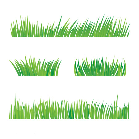 Green Grass, Isolated On White Background, Vector Illustration
