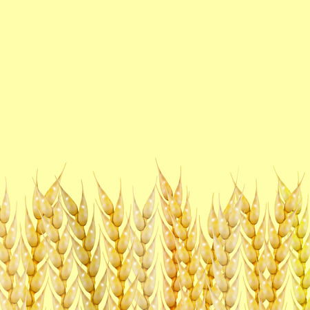 Background from a set of photo realistic spikelets of wheat, vector illustration.