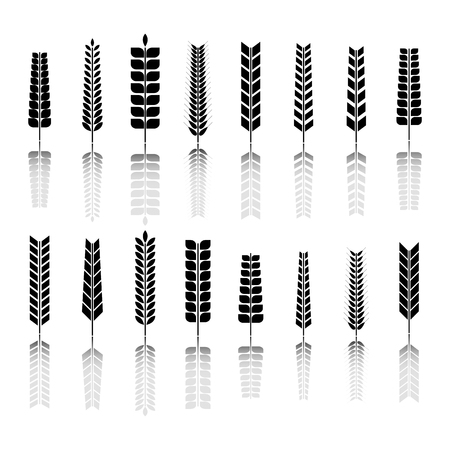 Set of various spikelets of wheat. Black silhouettes on a white background, vector illustration.