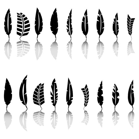 Set of various bird feathers. Black silhouettes on a white background, vector illustration. Banco de Imagens - 123986541