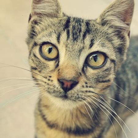 curios: curios cat