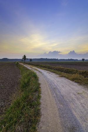 Paddy field road village