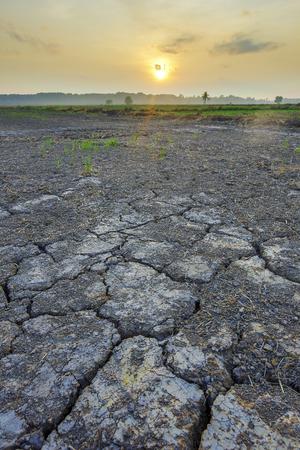 Dry paddy field soil during dry season Imagens