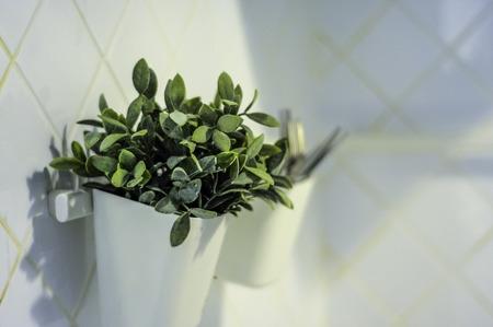 plant in the vass near toilet Imagens