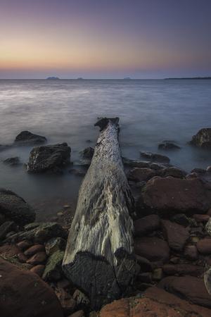 Abandone wooden tree stranden at the seaside shore on nice sunset / sunrise view
