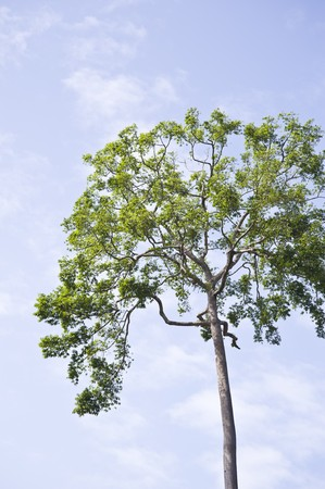 larger tree Stock Photo - 8250319