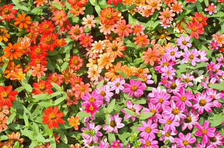 mini flower colorful