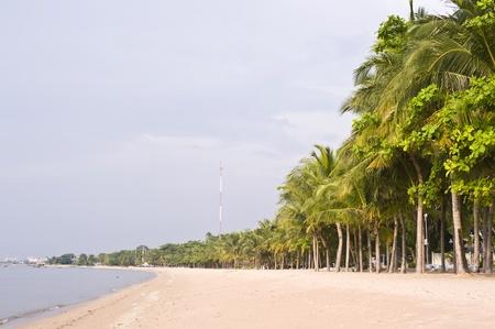 coconut palms near the beach photo