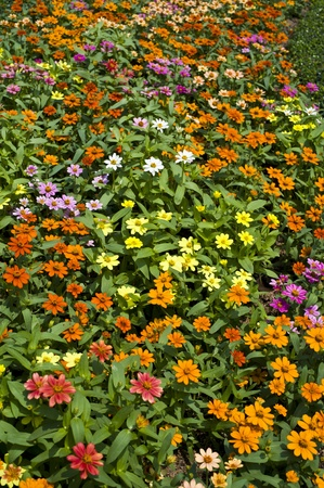 mini flower photo