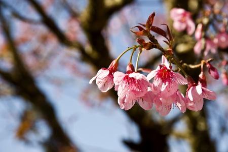 mini pink flower  photo
