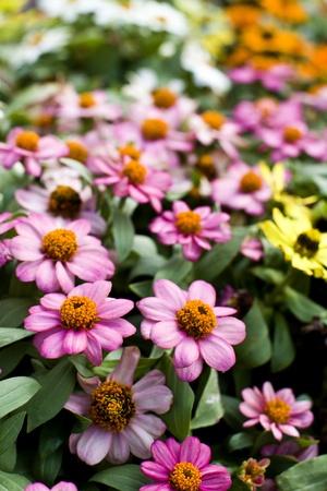 flower in garden Stock Photo - 10361486