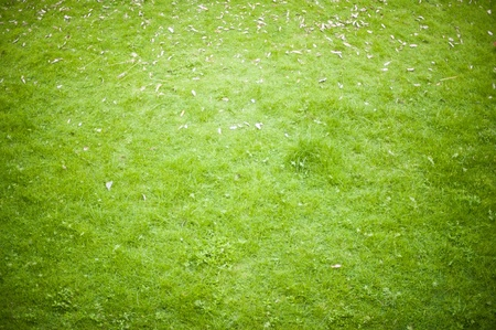 backgrounds of grass photo