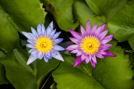 water lily in swamp Stock Photo - 17106499