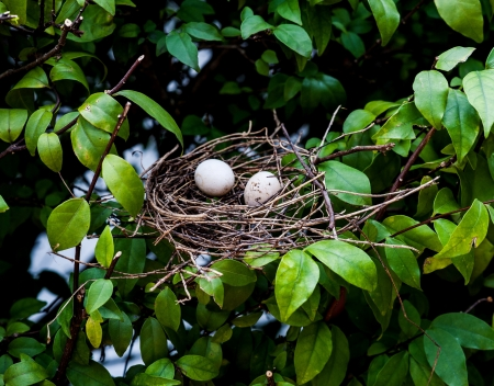 egg birds in net on tree  Stock Photo