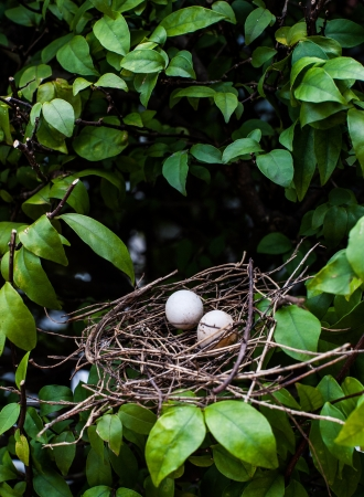 egg birds in net on tree  photo