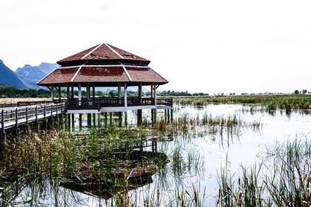 pavilion in swamp photo