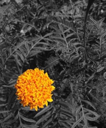 yellow flower in garden Stock Photo