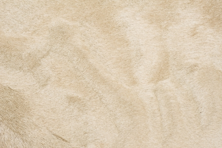 pelt: Beige color fur texture of background material  Stock Photo