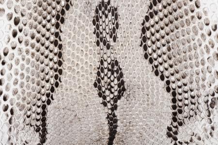 Leather texture of diamond python skin, close-up  photo