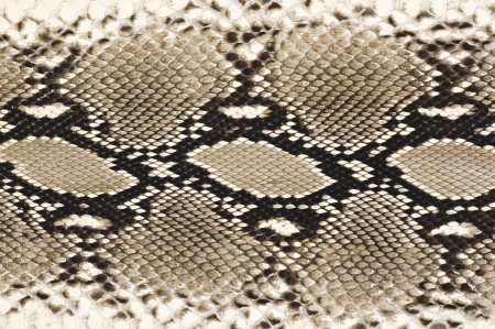 Snakeskin texture of background material