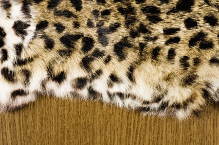 pelt: Leopard fur texture, close-up shoot of material for the background
