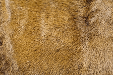 Brown fur texture, close-up shoot of material for the background  Foto de archivo