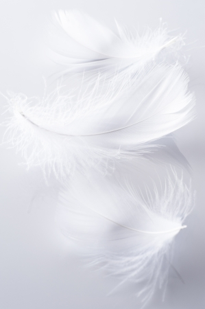 White feather of bird on gray background