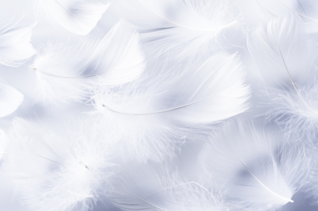 White feather of bird for background image  Stock Photo